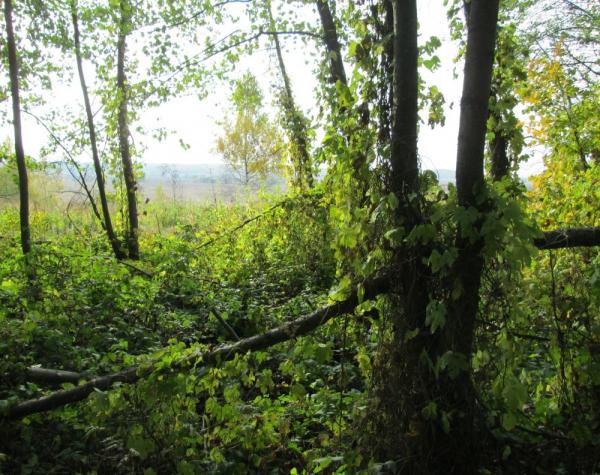 Красоты осеннего леса