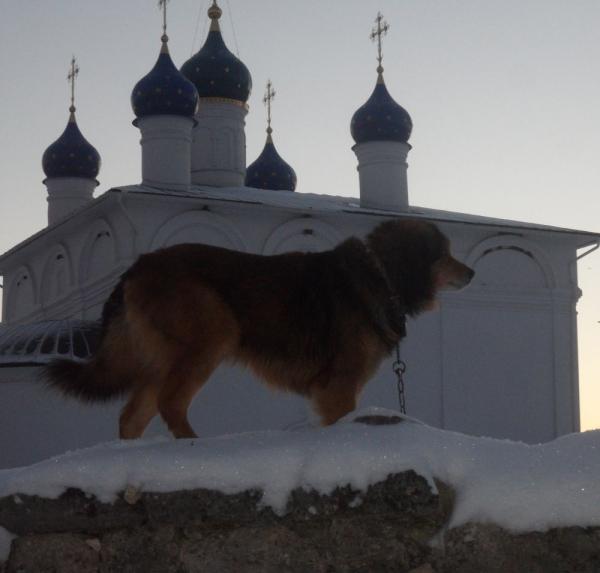 охранник монастыря Гром на фоне Успенского храма зима 2014/2015