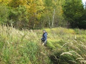 В пути за лесными дарами