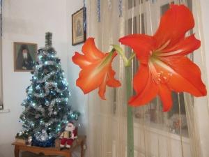Цветок распустился на праздник Крещения Господня