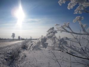 Зимний пейзаж поле с цветами в серебре