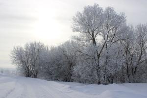 Зима 2021_11